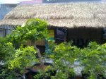 Williams Nursery Graha Raya Bintaro