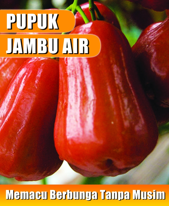 sticker pupuk jambu air